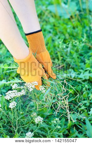 Girl Collects Grass Weeds In Garden
