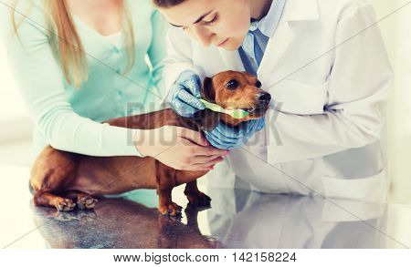 medicine, pet, animals, health care and people concept - woman with dachshund and veterinarian doctor brushing dog teeth with toothbrush at vet clinic