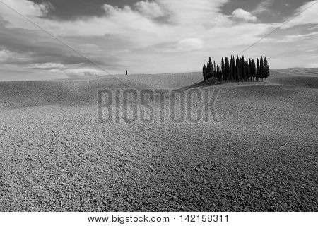 September plowed soil in the grove of cypresses in Val 'd'Orcia