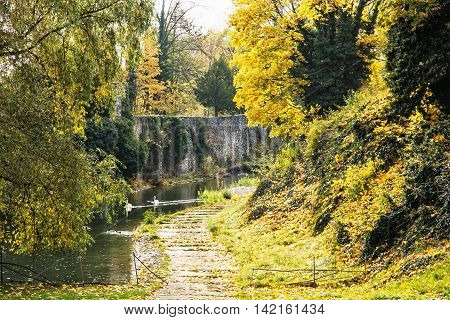 Moat with water swans and ducks in autumn time. Seasonal natural scene. Vibrant colors. Beauty in nature.