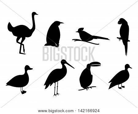 Vector set of black silhouette different  birds.