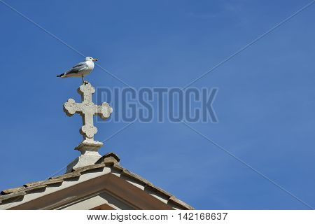 Lonely seagull on the top of a marble cross in Rome