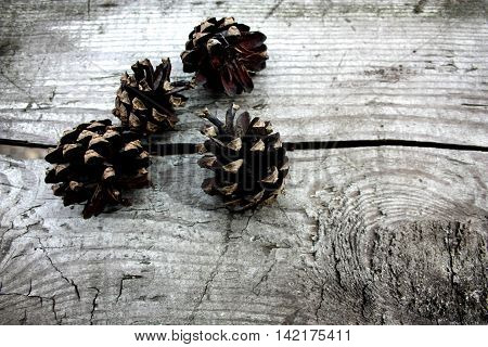 Three pine cones lying in the faded old board