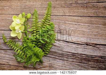 Fern leaf with orchid on rustic wooden background