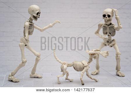 The skeleton dog bites the skeleton's arm away