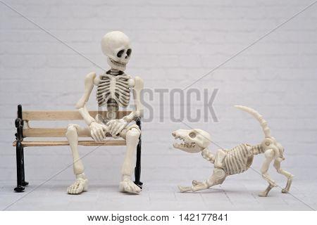 Skeleton and his playful skeleton puppy dog