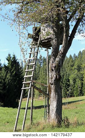 Shed The Hunter Over A Big Tree With Leaves