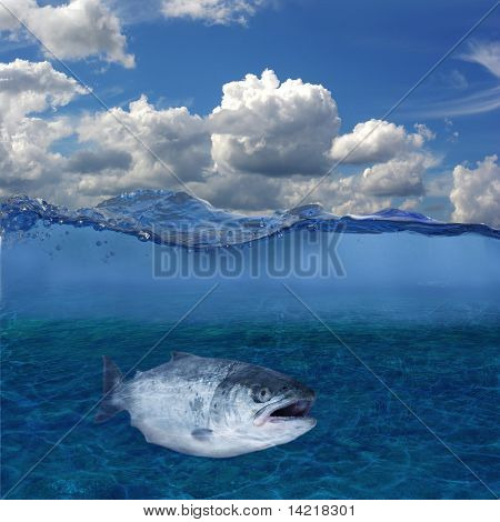 Long Salmon On Background Of Bottom Of River