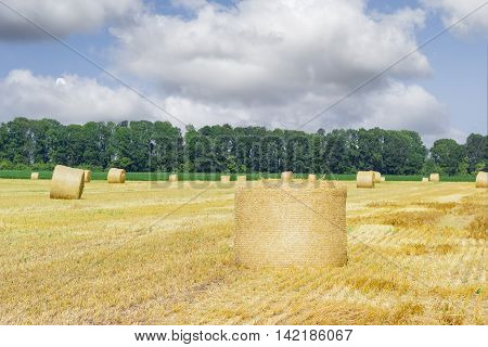 Large round straw bale of a barley on harvested field on a background of trees other bales and sky with clouds