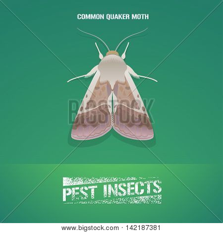 Realistic vector illustration of insect Noctuidae common quaker moth. Pest insect of agriculture farmland. Design element for insecticide poster brochure article