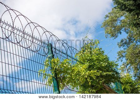 Coiled razor wire fence with a blue sky background