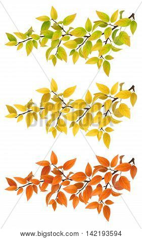 Set branches with autumn yellow and red leaves. Super realistic vector foliage isolated on white background. Element for design Autumn postcard with trees.