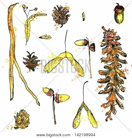 watercolor set of twigs, pine cones, seeds and acorns, hand drawn nature illustration