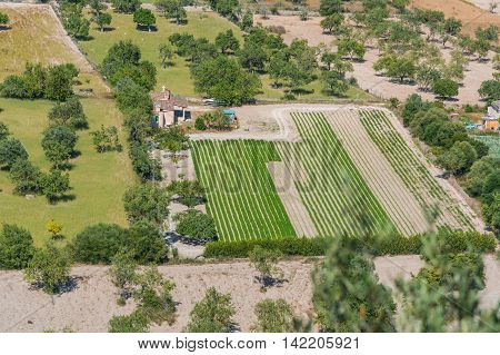 Panoramic view of different fields Mallorca Spain