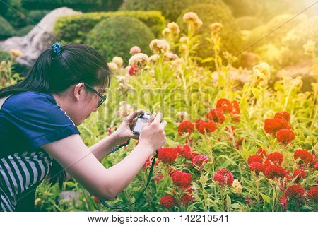 Female photographer holding professional digital camera. Asian woman taking photographs of beautiful red celosia cristata in garden with bright sunlight. Outdoor.