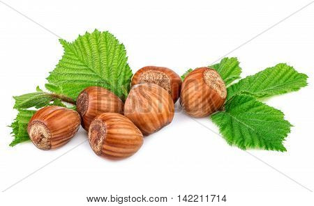 Filberts hazel nuts with leaf on white background