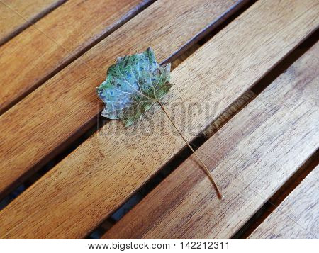 The approach of autumn - lone leaf fell on wooden table