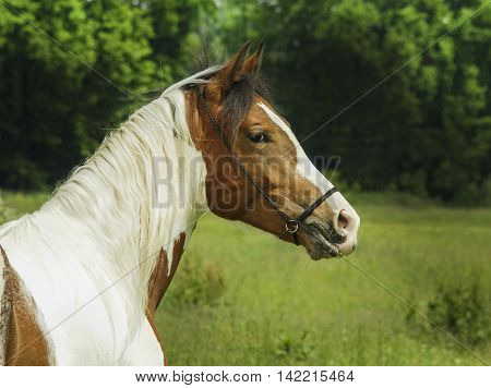 White horse with brown spots and light mane standing on green grass