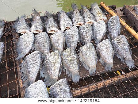 Dried fish expose to sun, Bangkok, Thailand, Food image