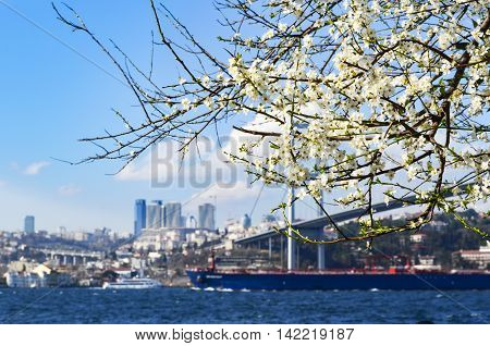 Bosphorus in spring. View of sea through the branches of tree in Istanbul Turkey