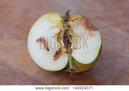 half of a wormy apple with maggot larva on wooden background