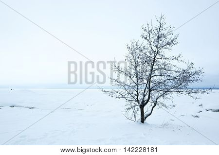Coast of Finnish Gulf in winter Leningrad region Russia