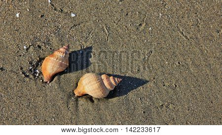 Two ea shells at a beach in New Zealand.