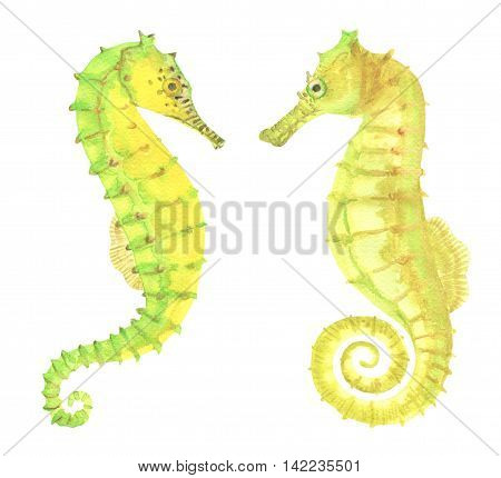 Green and yellow watercolor seahorses isolated on white