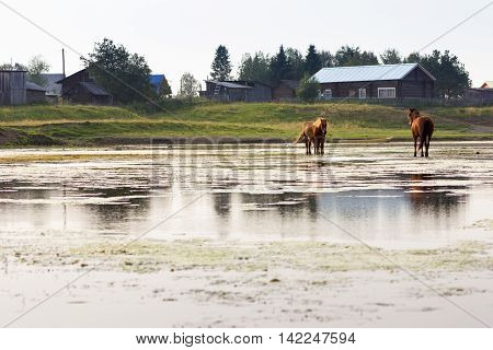 Three red horses stand in the river beside village
