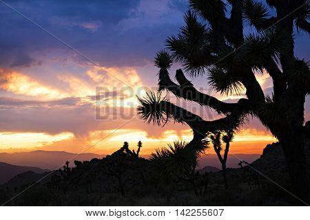 Sunset at Joshua Tree National Park, California.