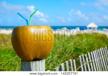 Miami South Beach coconut drink with 2 straws in Florida
