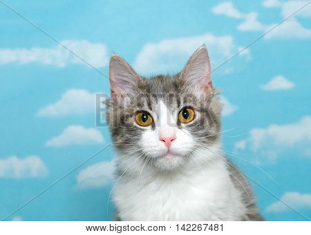 Gray and white long haired tabby kitten approximately 4 months old sitting up looking at viewer with bright yellow eyes blue background sky with white clouds. Copy space.