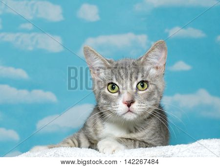 gray and white striped tabby kitten approximately 2 months old laying on white blanket looking at viewer. Blue background sky with white clouds. yellow and green eyes. Copy space.
