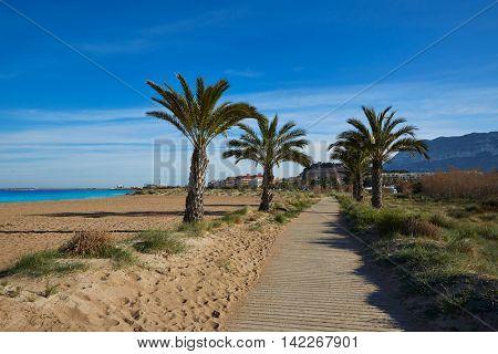 Denia Las Marinas beach palm trees in mediterranean Alicante of Spain