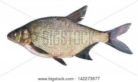 Bream ( Abramis brama ) on a white background . Adult female before spawning . Weight of fish - 2130 grams. Place catch - Oka River Irkutsk region . Harvest date - 14/06/2016