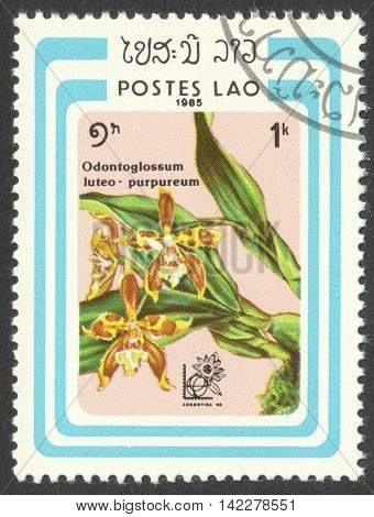 MOSCOW RUSSIA - CIRCA MAY 2016: a post stamp printed in LAOS shows Odontoglossum luteo-purpureum orchid the series