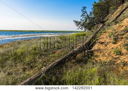 The spring flood every year washes away a steep sand Bank North of the river Kika, and then the pine trees standing on the edge of the cliff, falling into the water.