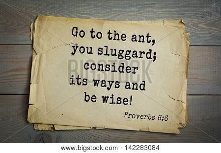 TOP-700 Bible verses from Proverbs. Go to the ant, you sluggard; consider its ways and be wise!