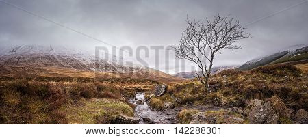 Lonely tree at the Fairy Pools on a snowy day on Isle of Skye - Scotland, UK