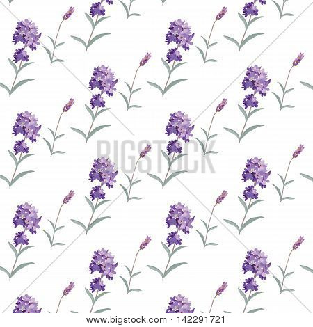 Lavender pattern with flowers in watercolor paint style Vector . Gentle blossom floral bouquet. Vintage Label with lavender beautiful fragrance