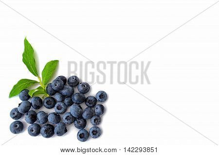 Blueberries with leaves on white background on left hand side