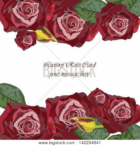 Watercolor Dark Red Rose card. Vector rose flower for background greeting cards and invitations of the wedding birthday Valentine's Day Mother's Day