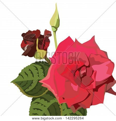 Red Rose isolated on white. Red rose. Vector rose flower for background greeting cards and invitations of the wedding birthday Valentine's Day Mother's Day