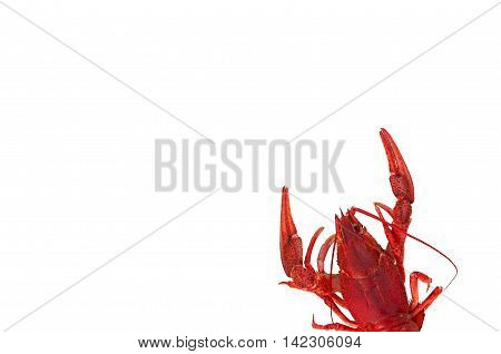 red boiled crawfish isolated on white background