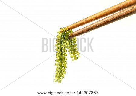 Chopsticks with sea grapes ( green caviar ) seaweed Healthy food.