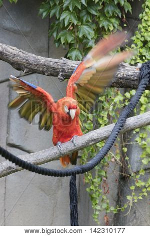 Ara Macaw Parrot On Its Perch