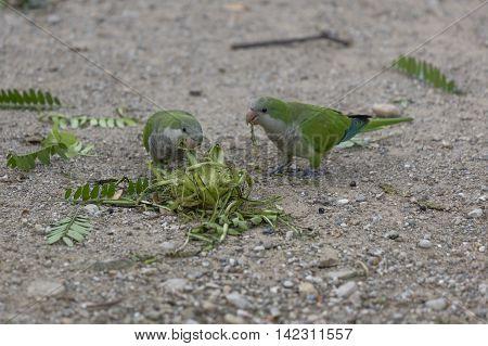 Parakeet Parrot On Its Perch