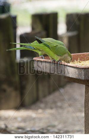 a green parakeet parrot on its perch