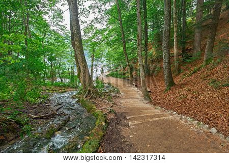 Deep Forest Road Trail in Plitvice National Park Croatia with Water Stream