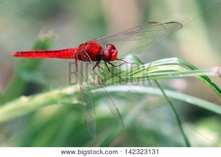 Image of dragonfly perched on a green leaf.